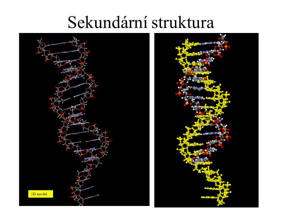 Sekundární struktura 3D model