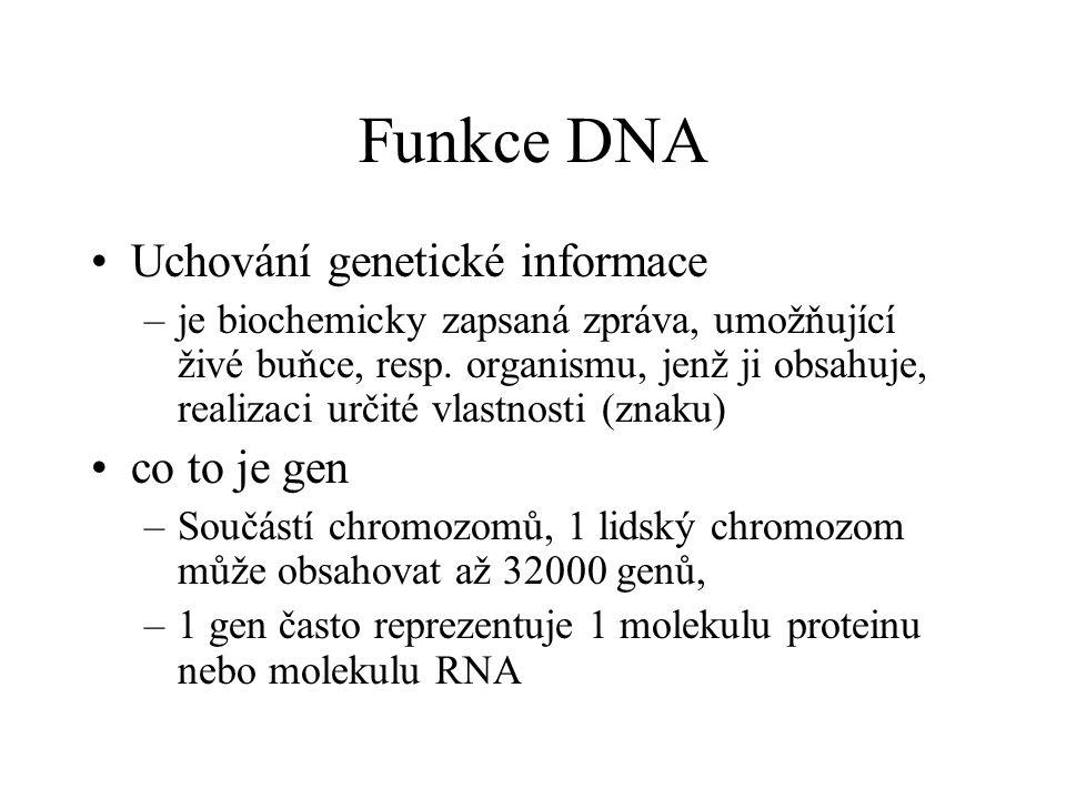 Funkce DNA Uchování genetické informace –je biochemicky zapsaná zpráva, umožňující živé buňce, resp. organismu, jenž ji obsahuje, realizaci určité vla