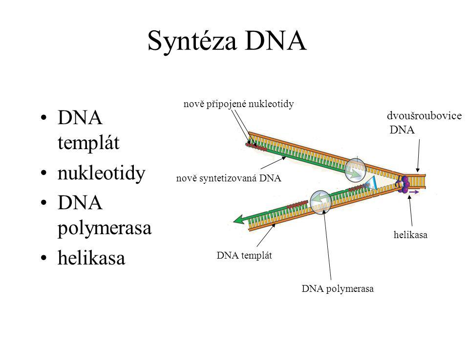 Syntéza DNA DNA templát nukleotidy DNA polymerasa helikasa DNA polymerasa helikasa dvoušroubovice DNA DNA templát nově syntetizovaná DNA nově připojen
