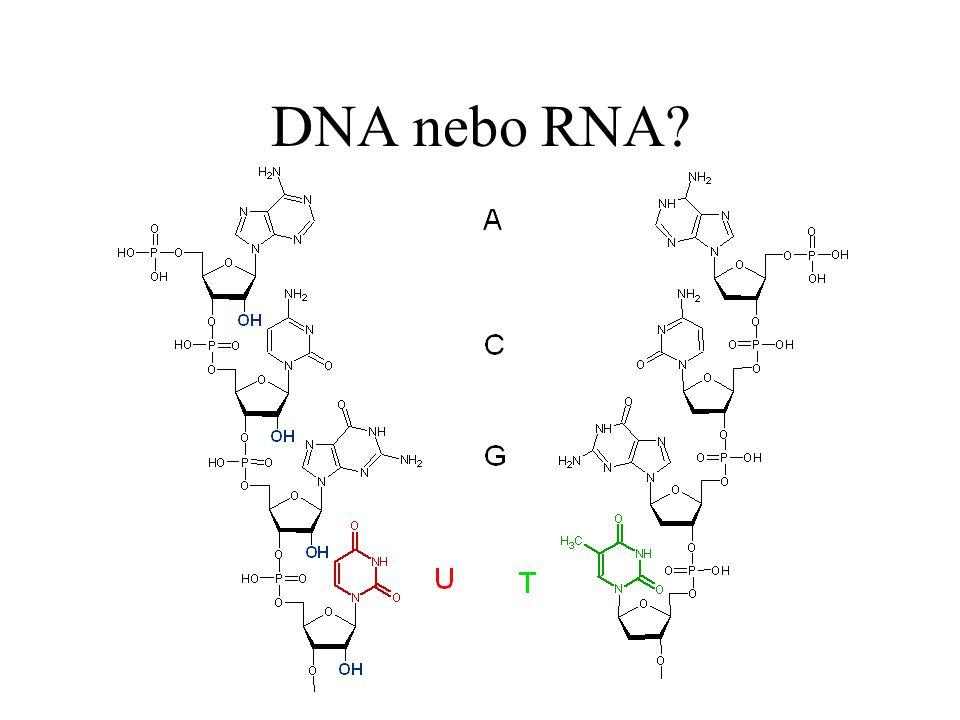 DNA nebo RNA?