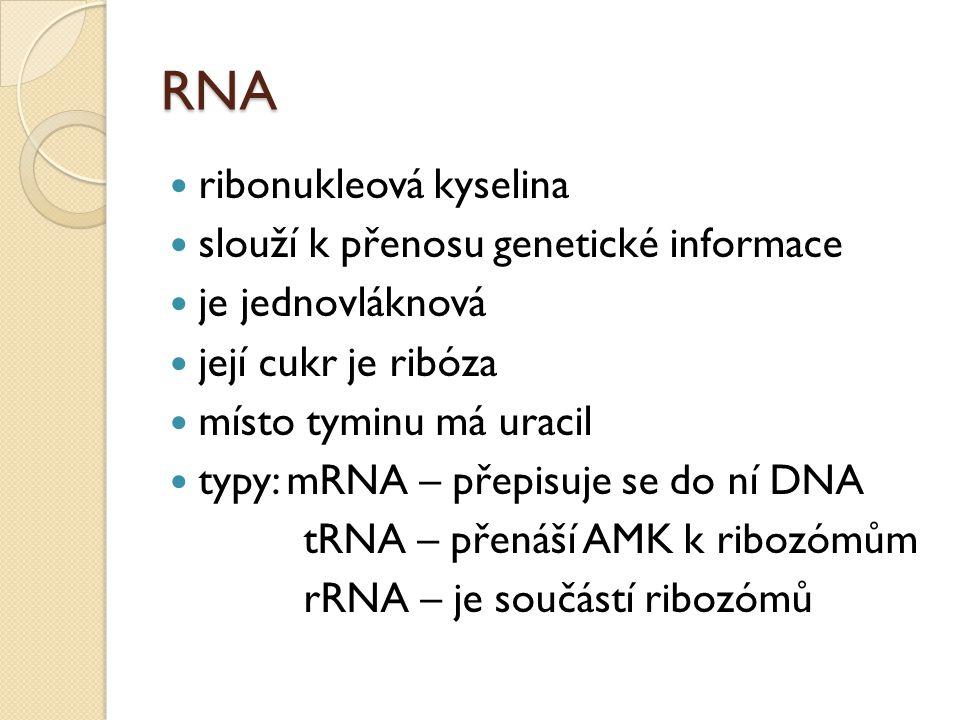 RNA ribonukleová kyselina slouží k přenosu genetické informace je jednovláknová její cukr je ribóza místo tyminu má uracil typy: mRNA – přepisuje se d