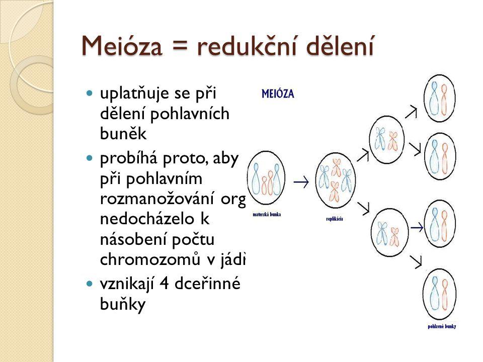 Meióza = redukční dělení uplatňuje se při dělení pohlavních buněk probíhá proto, aby při pohlavním rozmanožování org. nedocházelo k násobení počtu chr