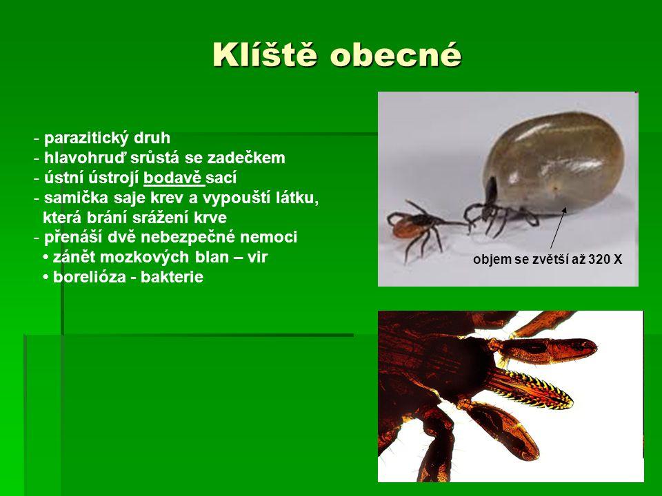 Klíště obecné - parazitický druh - hlavohruď srůstá se zadečkem - ústní ústrojí bodavě sací - samička saje krev a vypouští látku, která brání srážení