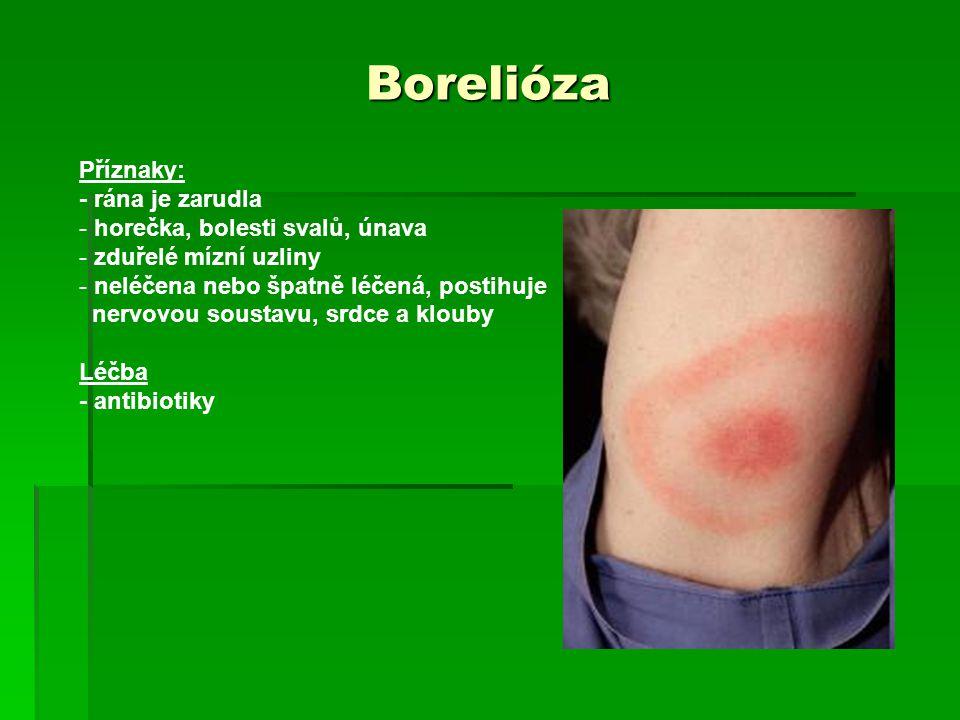 Borelióza Příznaky: - rána je zarudla - horečka, bolesti svalů, únava - zduřelé mízní uzliny - neléčena nebo špatně léčená, postihuje nervovou soustav