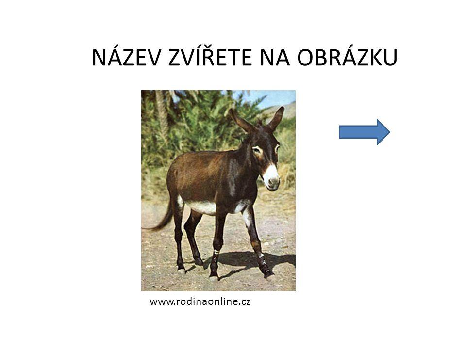 www.rodinaonline.cz NÁZEV ZVÍŘETE NA OBRÁZKU