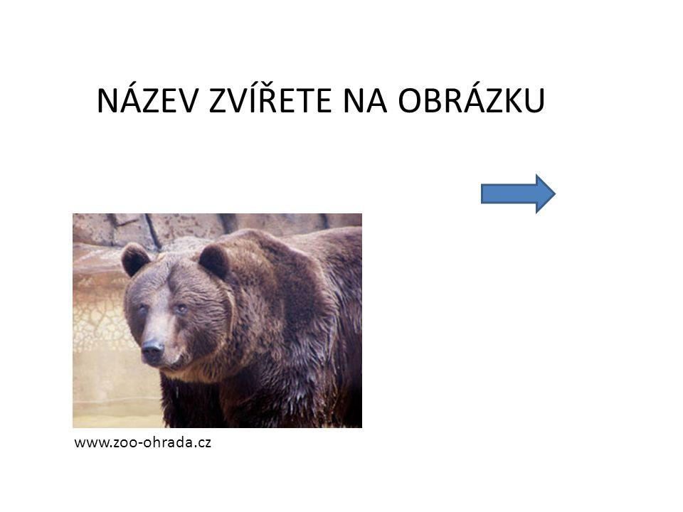 NÁZEV ZVÍŘETE NA OBRÁZKU www.zoo-ohrada.cz