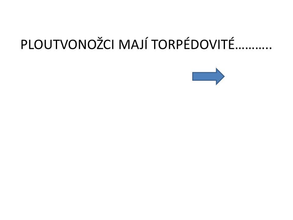 PLOUTVONOŽCI MAJÍ TORPÉDOVITÉ………..