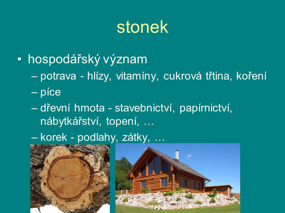 stonek hospodářský význam –potrava - hlízy, vitamíny, cukrová třtina, koření –píce –dřevní hmota - stavebnictví, papírnictví, nábytkářství, topení, … –korek - podlahy, zátky, …