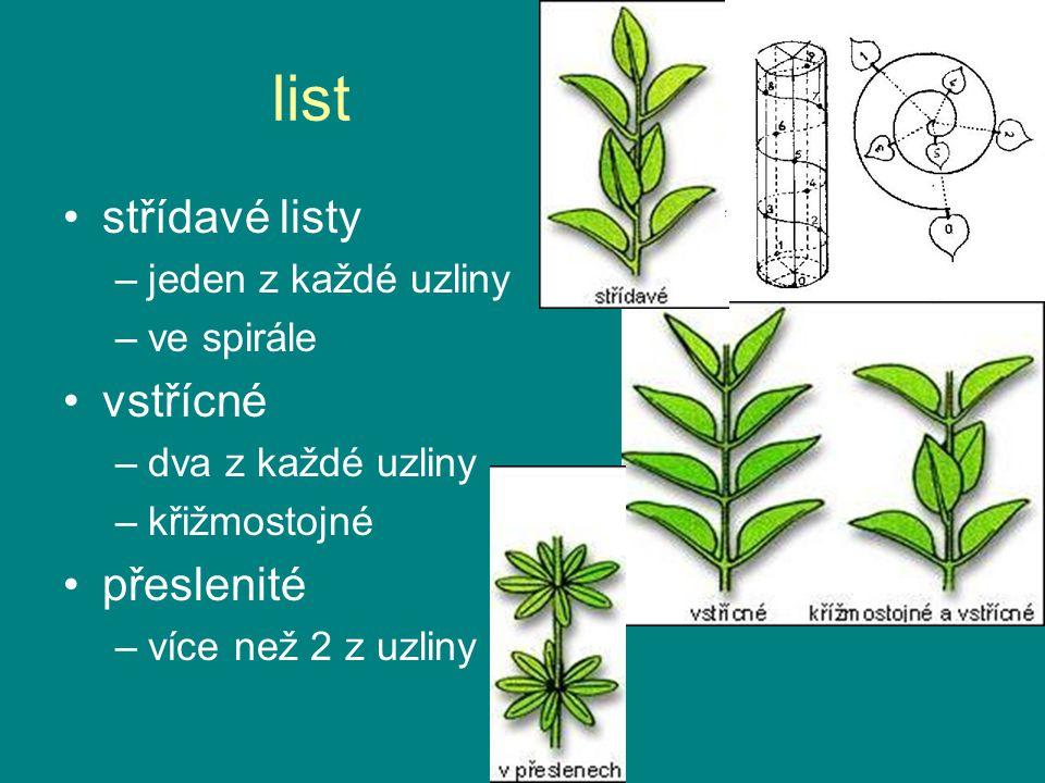 list střídavé listy –jeden z každé uzliny –ve spirále vstřícné –dva z každé uzliny –křižmostojné přeslenité –více než 2 z uzliny