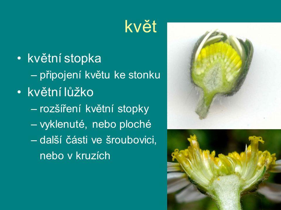 květ květní stopka –připojení květu ke stonku květní lůžko –rozšíření květní stopky –vyklenuté, nebo ploché –další části ve šroubovici, nebo v kruzích