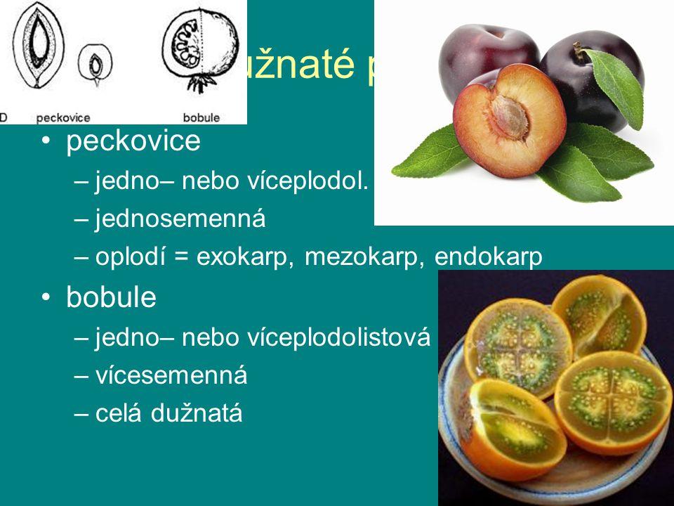 dužnaté plody peckovice –jedno– nebo víceplodol.