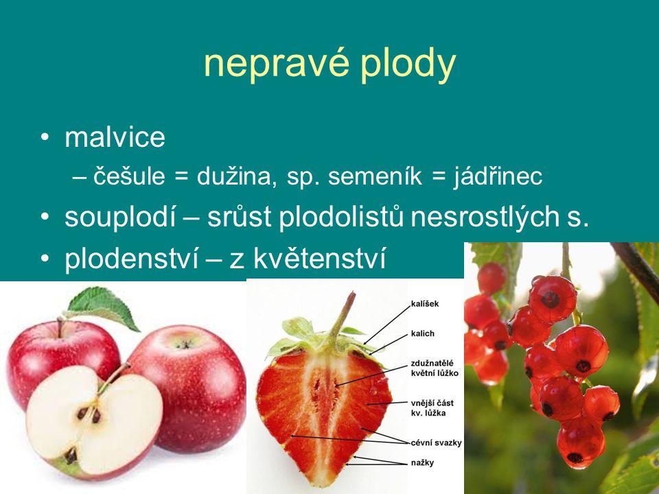 nepravé plody malvice –češule = dužina, sp.