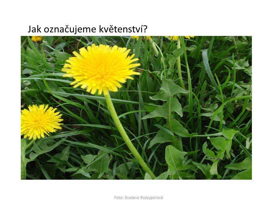 Jak označujeme květenství? Foto: Svatava Rozsypalová