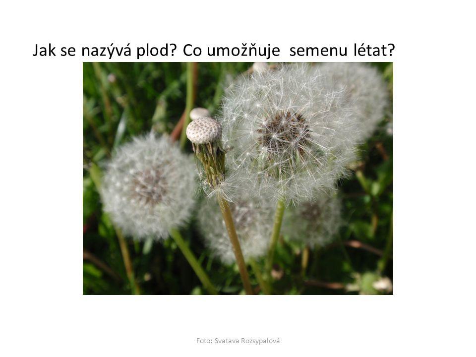 Jak se nazývá plod? Co umožňuje semenu létat?