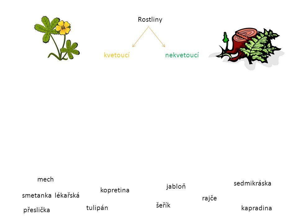 Přiřaď správně názvy Léčivé rostliny Jedovaté rostliny Chráněné rostliny smetanka lékařská pryskyřník šípek bledule jarní leknín vraní oko čtyřlisté hořec lípa