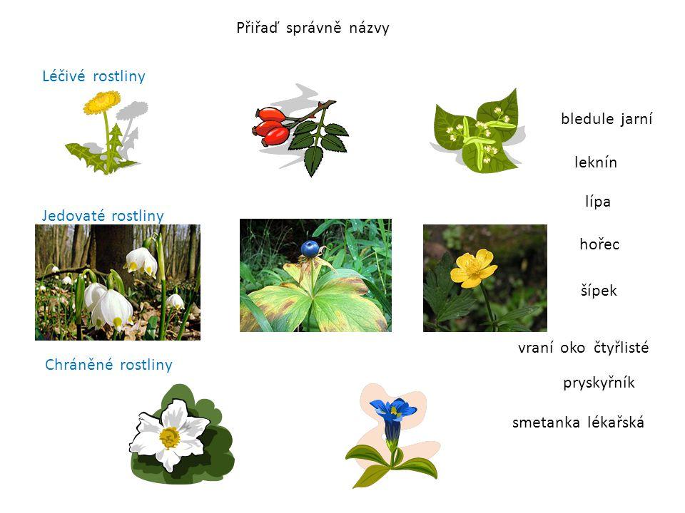 Přiřaď správně názvy Léčivé rostliny Jedovaté rostliny Chráněné rostliny smetanka lékařská pryskyřník šípek bledule jarní leknín vraní oko čtyřlisté h