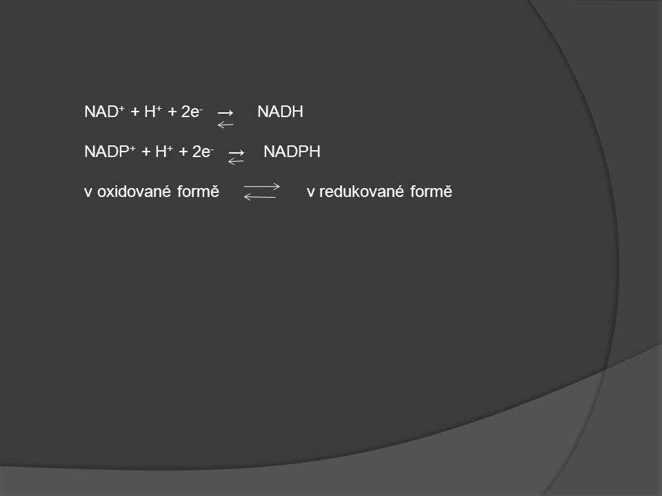 NAD + + H + + 2e - → NADH NADP + + H + + 2e - → NADPH v oxidované formě v redukované formě