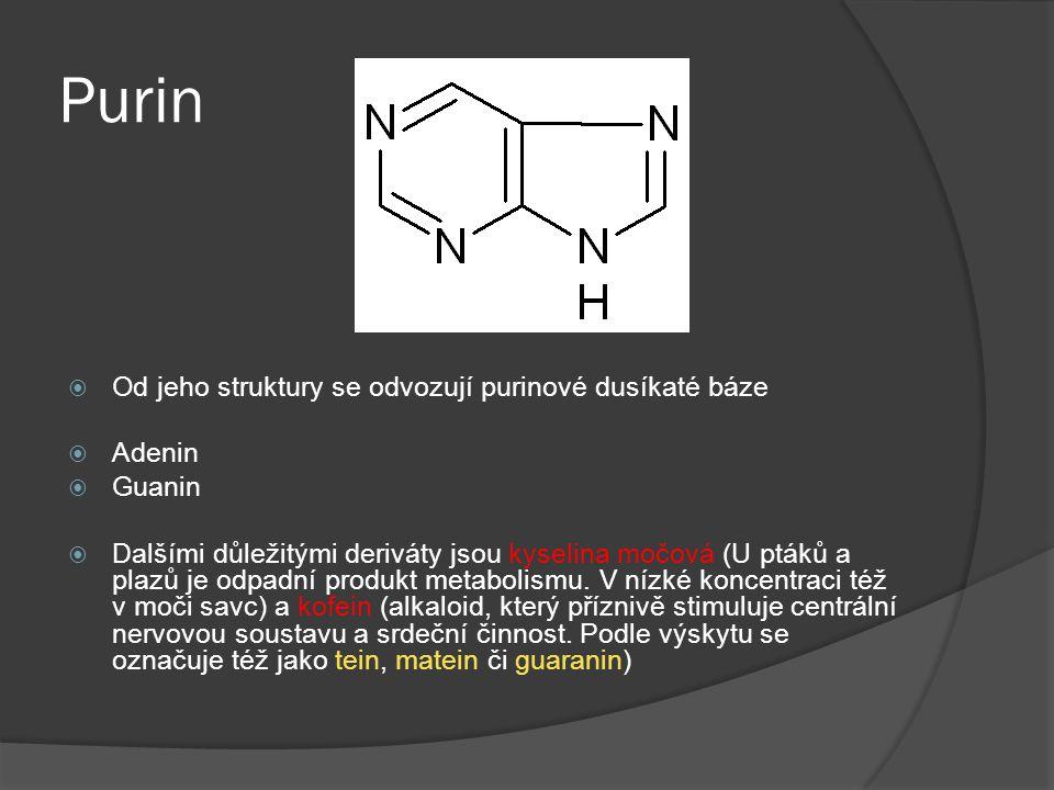 Purin  Od jeho struktury se odvozují purinové dusíkaté báze  Adenin  Guanin  Dalšími důležitými deriváty jsou kyselina močová (U ptáků a plazů je