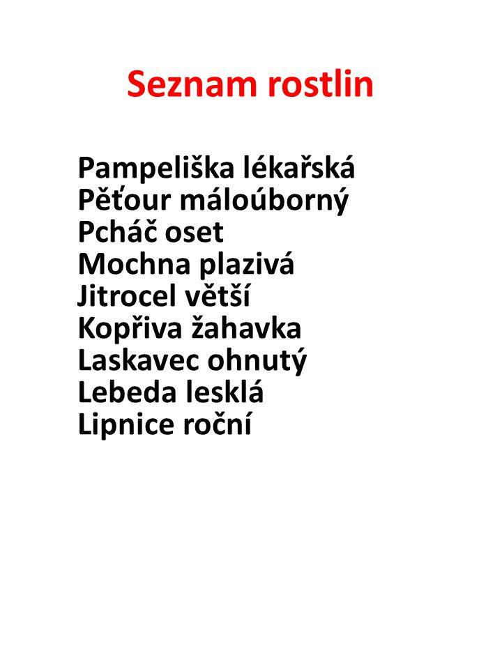 Seznam rostlin Pampeliška lékařská Pěťour máloúborný Pcháč oset Mochna plazivá Jitrocel větší Kopřiva žahavka Laskavec ohnutý Lebeda lesklá Lipnice ro