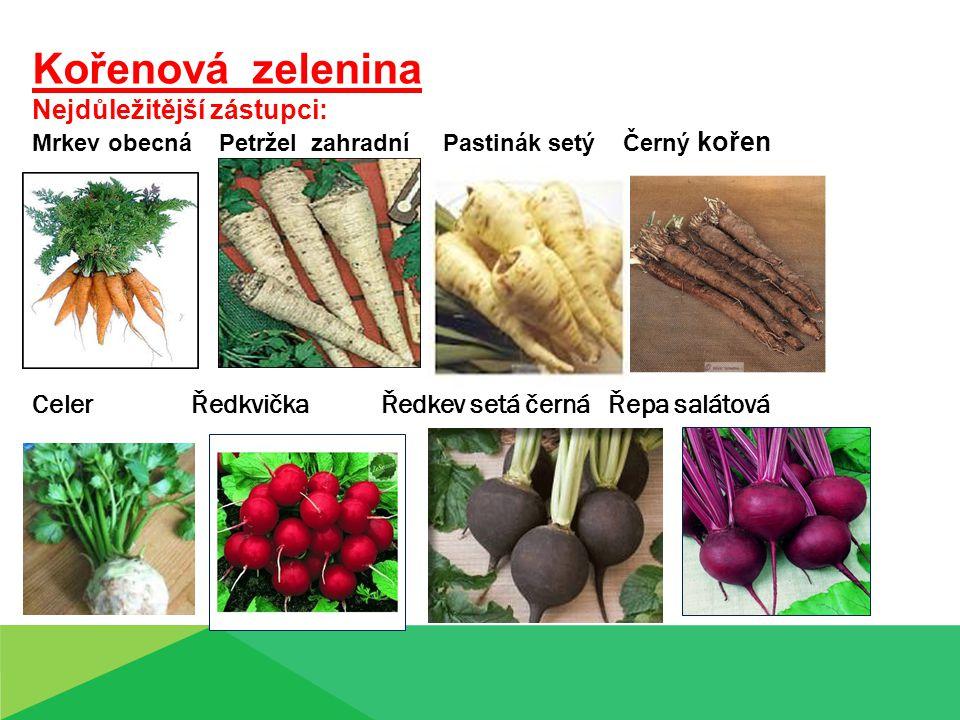 Mrkev obecná ( Daucus carota ) Čeleď: Miříkovité - Apiaceae Původ: Středomoří, Irán, Balkán, Španělsko - Evropa Význam pěstování: 1.Přímý konzum, 2.