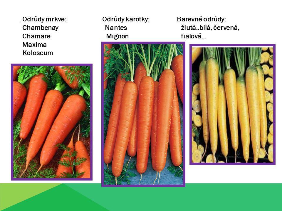 Odrůdy mrkve: Odrůdy karotky: Barevné odrůdy: Chambenay Nantes žlutá..bílá, červená, Chamare Mignon fialová… Maxima Koloseum