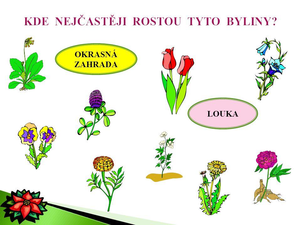 OKRASNÁ ZAHRADA LOUKA