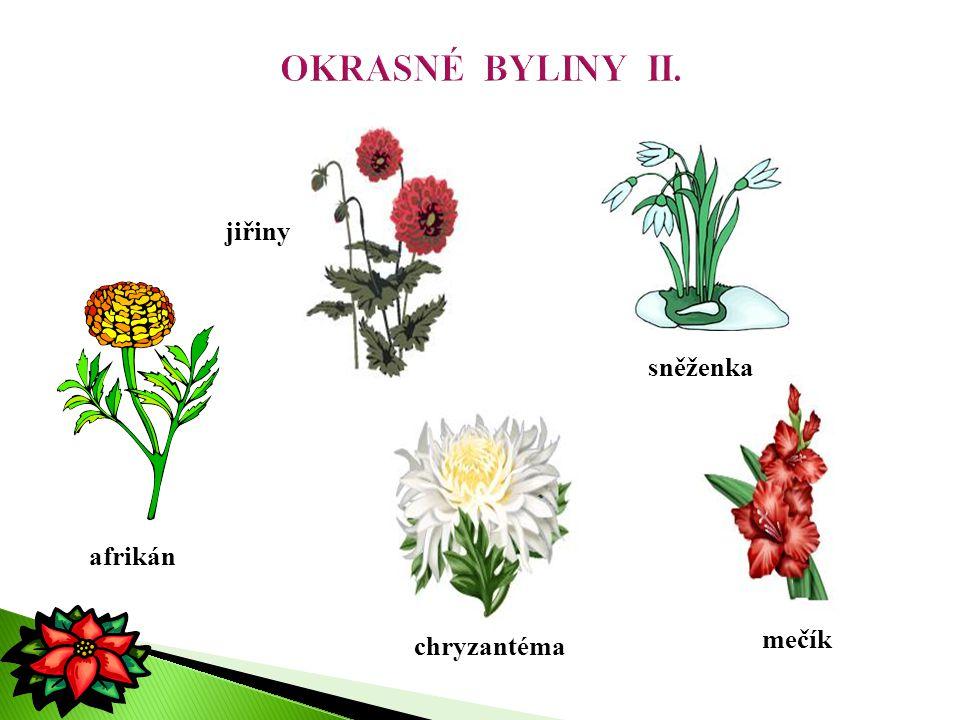  rostliny volně rostoucí na loukách, v lesích, okolo polí, kolem vod i ve vodě  říkáme jim též plané nebo luční byliny sasanka zvonek pampeliška jetel prvosenka