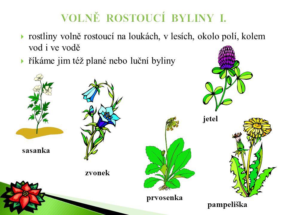  rostliny volně rostoucí na loukách, v lesích, okolo polí, kolem vod i ve vodě  říkáme jim též plané nebo luční byliny sasanka zvonek pampeliška jet
