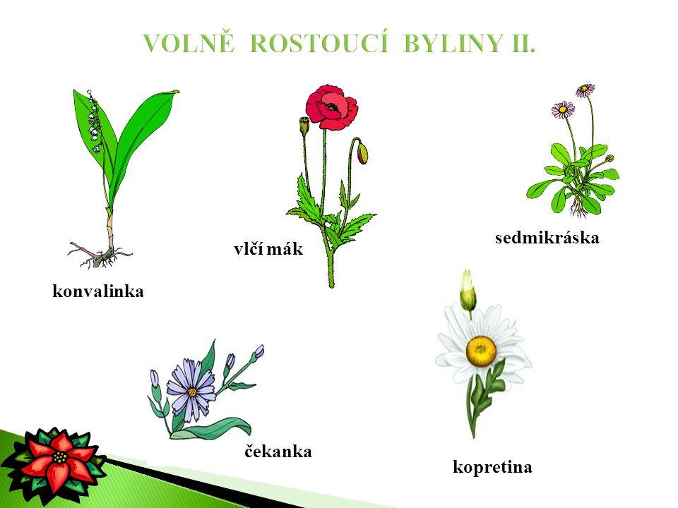 rostliny, které pěstujeme doma pro radost, zkrášlují nám bydlení  venku pěstujeme tyto rostliny pouze v létě fialka ibišek hvozdík kaktus brambořík