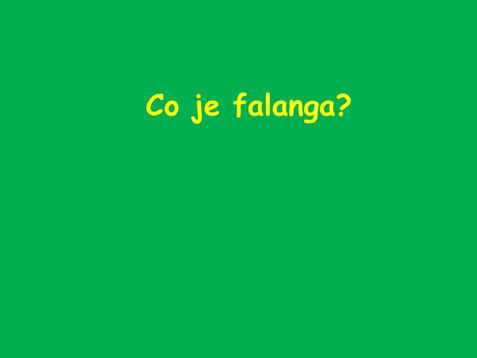 Co je falanga?