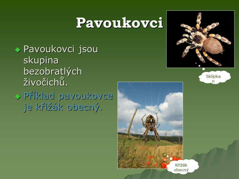 Pavoukovci  Pavoukovci jsou skupina bezobratlých živočichů.  Příklad pavoukovce je křižák obecný. Sklípka n Křižák obecný