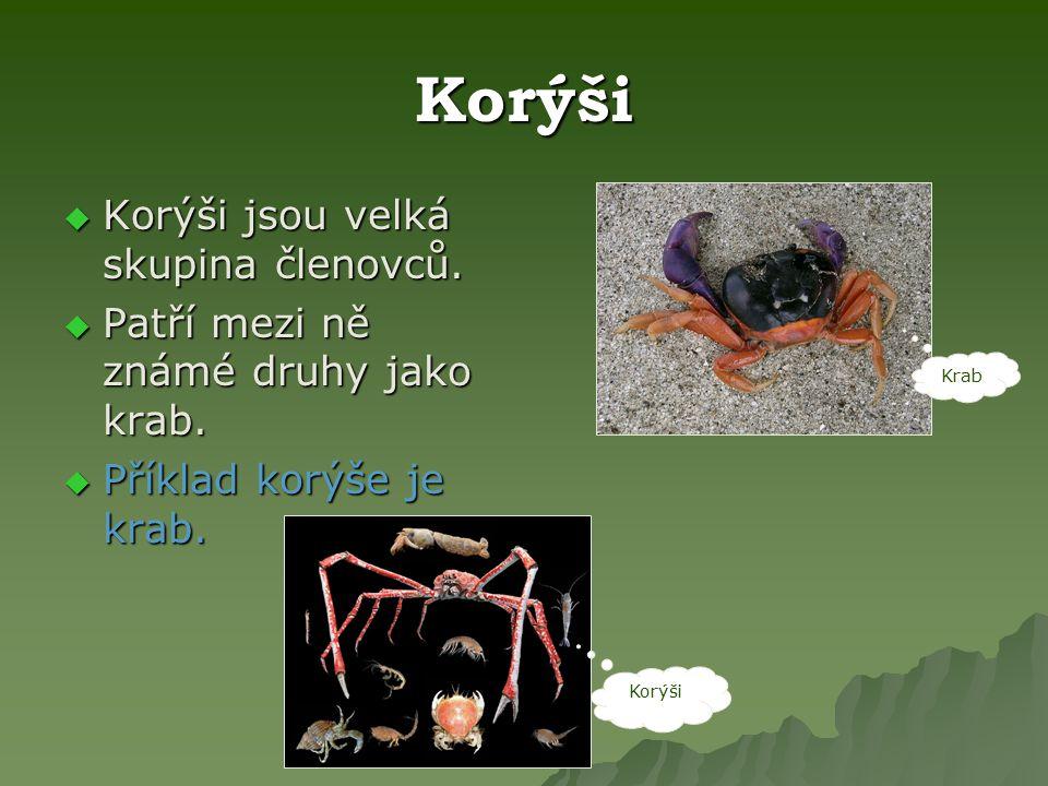 Korýši  Korýši jsou velká skupina členovců.  Patří mezi ně známé druhy jako krab.  Příklad korýše je krab. Krab Korýši