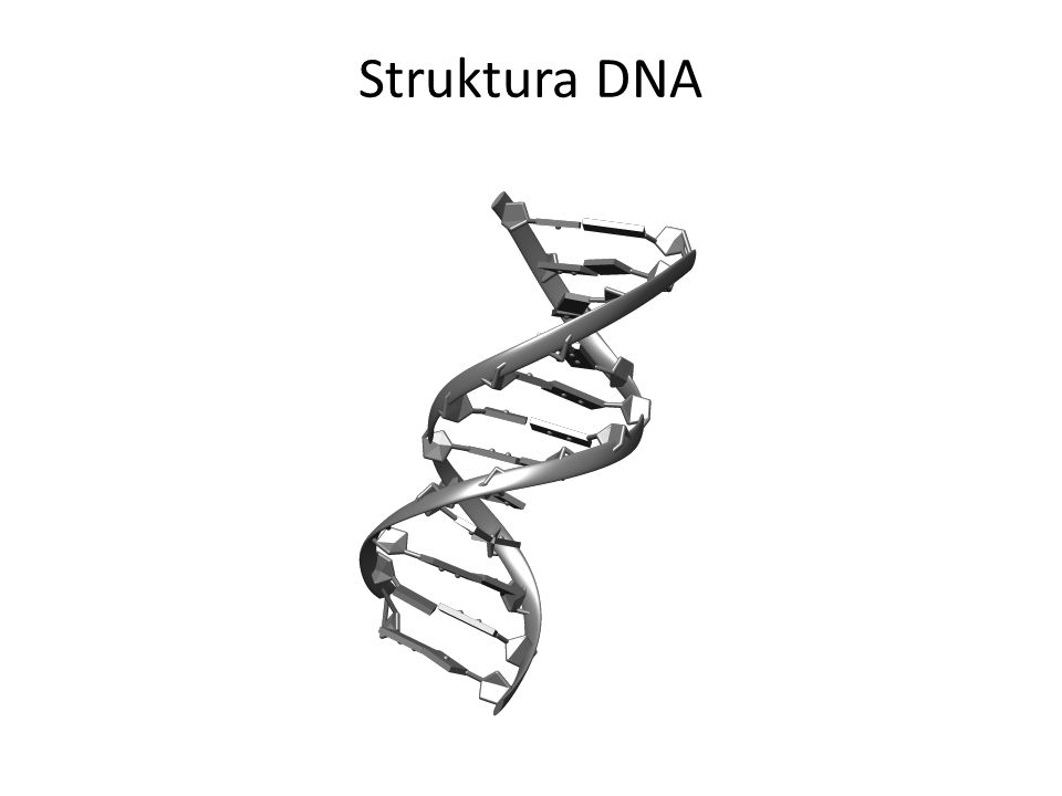 nukleotid Struktura DNA stavební jednotky
