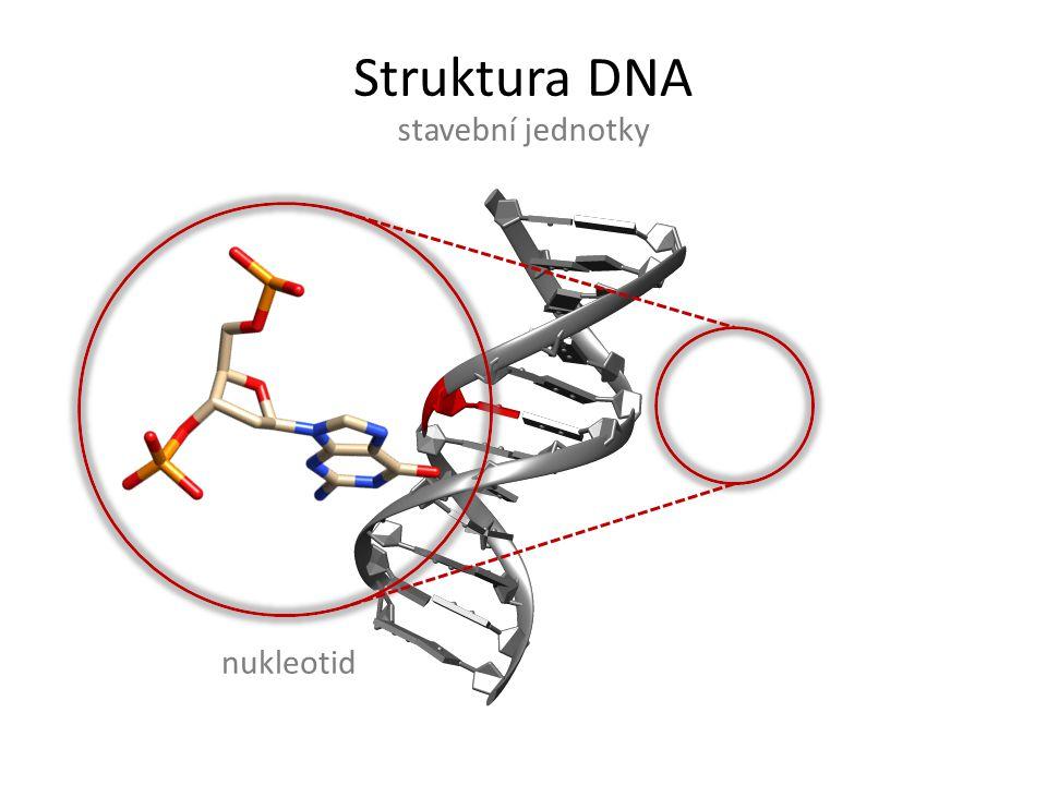Struktura DNA variabilita na lokální úrovni dinukleotid
