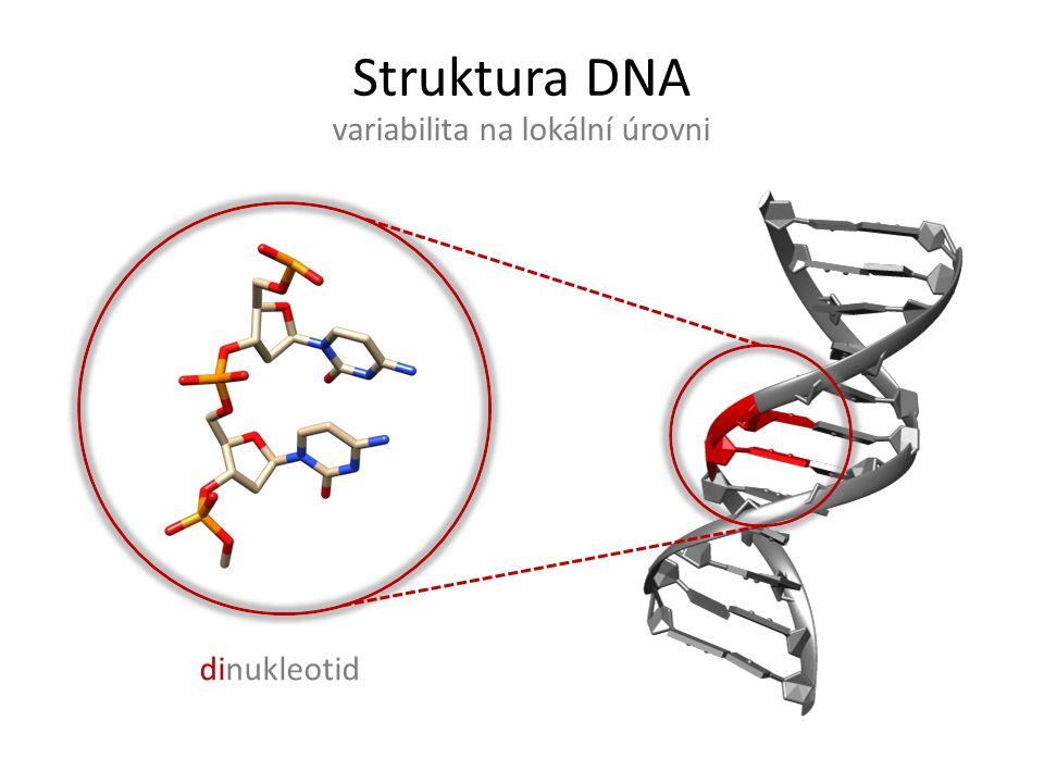 """Struktura DNA variabilita na lokální úrovni dinukleotid""""suite"""