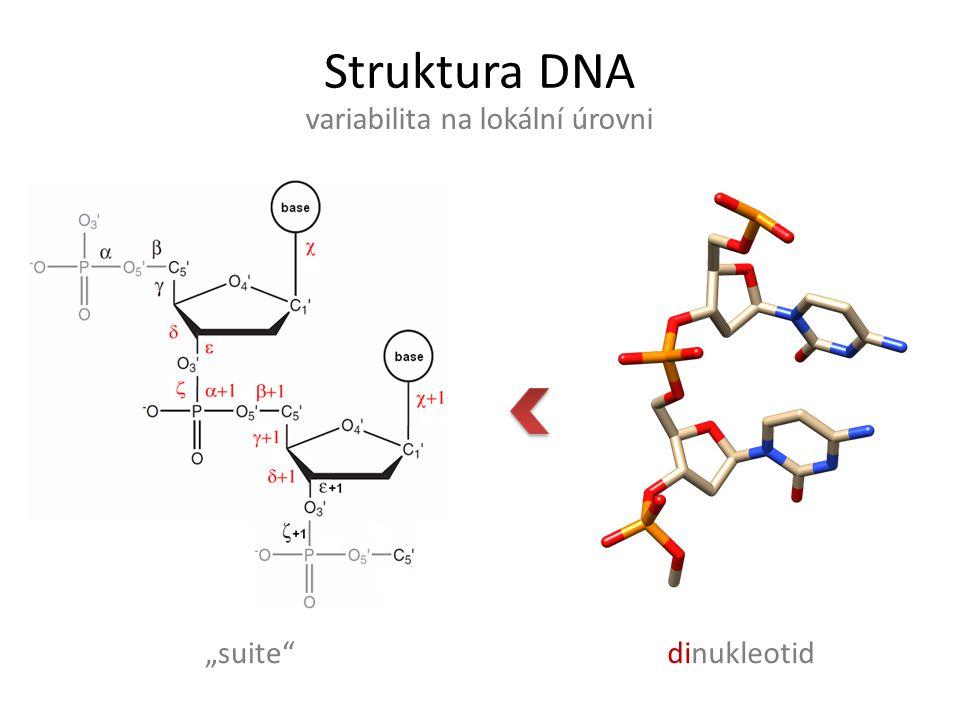 """Struktura DNA variabilita na lokální úrovni dinukleotid""""suite"""""""