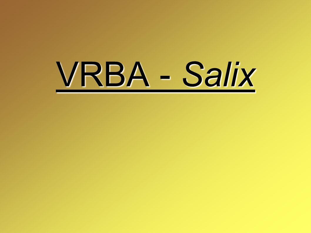 VRBA - Salix