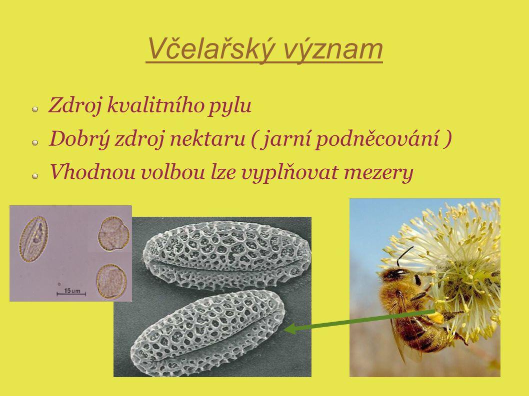 Včelařský význam Zdroj kvalitního pylu Dobrý zdroj nektaru ( jarní podněcování ) Vhodnou volbou lze vyplňovat mezery
