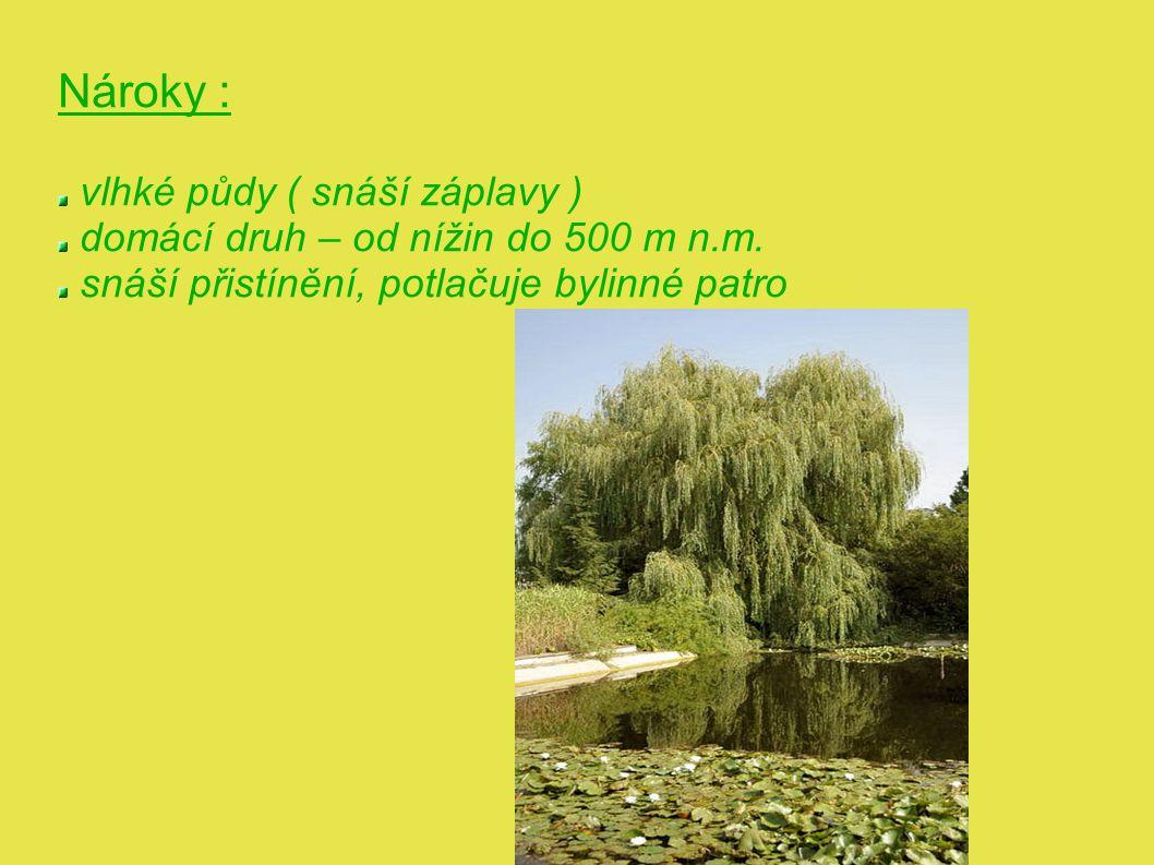 VRBA UŠATÁ ( Salix aurita ) 0,5 – 2 m ½ IV - od nížin až po hranici lesa - kyselé, extrémně chudé půdy - znečištěné ovzduší