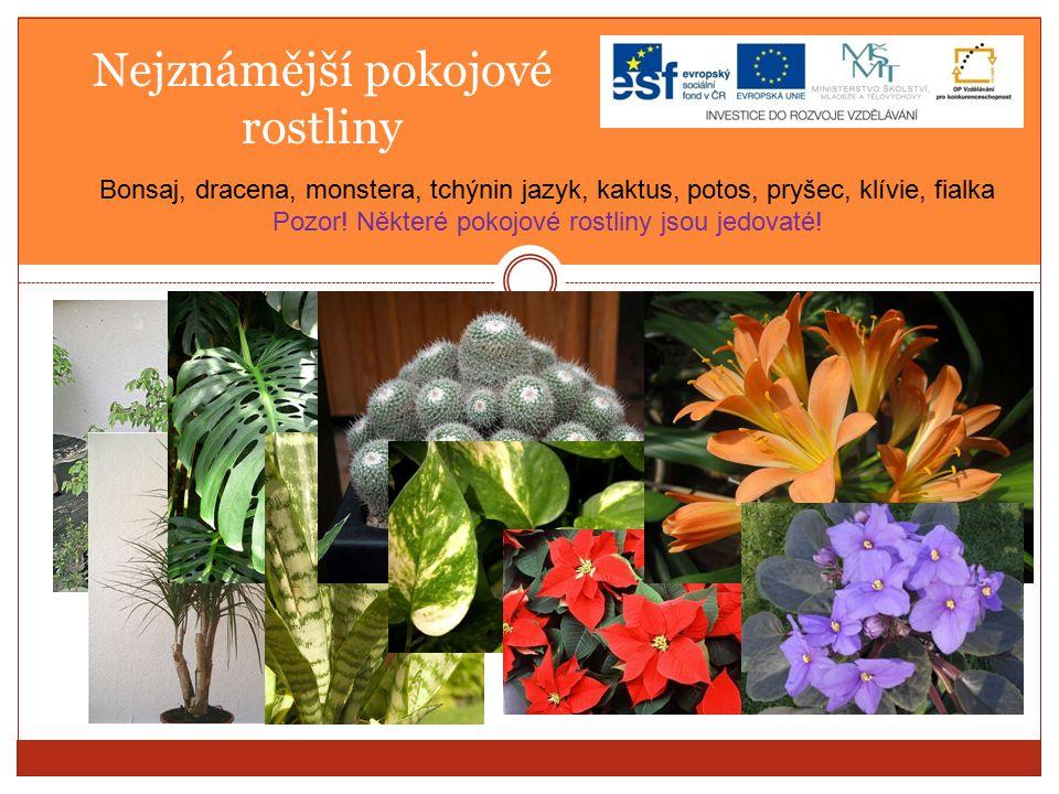 Nejznámější pokojové rostliny Bonsaj, dracena, monstera, tchýnin jazyk, kaktus, potos, pryšec, klívie, fialka Pozor.