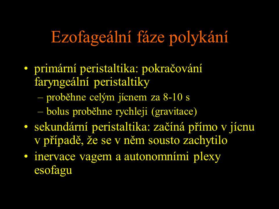 Ezofageální fáze polykání primární peristaltika: pokračování faryngeální peristaltiky –proběhne celým jícnem za 8-10 s –bolus proběhne rychleji (gravi