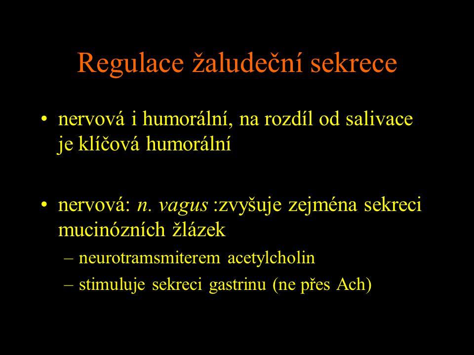 Regulace žaludeční sekrece nervová i humorální, na rozdíl od salivace je klíčová humorální nervová: n. vagus :zvyšuje zejména sekreci mucinózních žláz