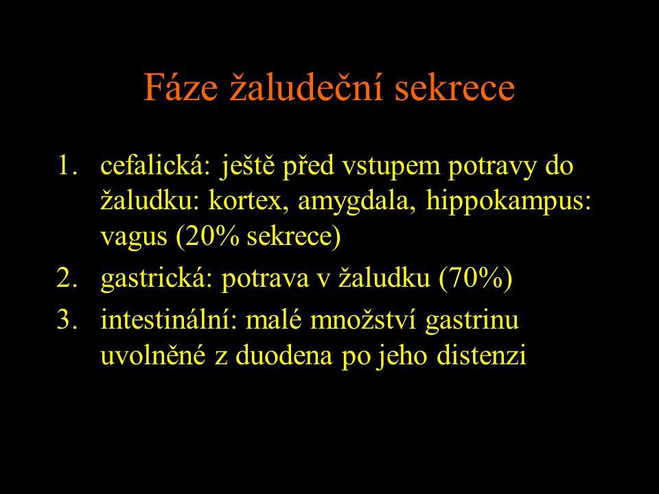Fáze žaludeční sekrece 1.cefalická: ještě před vstupem potravy do žaludku: kortex, amygdala, hippokampus: vagus (20% sekrece) 2.gastrická: potrava v ž