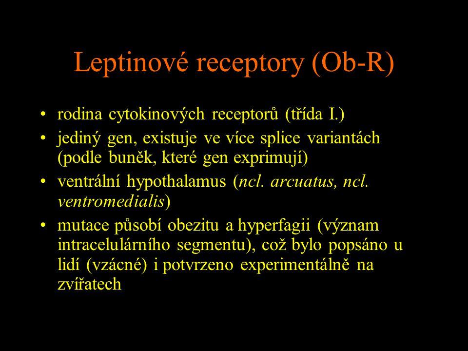 Leptinové receptory (Ob-R) rodina cytokinových receptorů (třída I.) jediný gen, existuje ve více splice variantách (podle buněk, které gen exprimují)