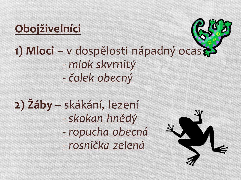 Obojživelníci 1) Mloci – v dospělosti nápadný ocas - mlok skvrnitý - čolek obecný 2) Žáby – skákání, lezení - skokan hnědý - ropucha obecná - rosnička zelená