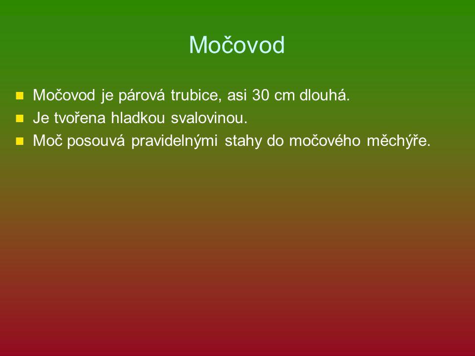 Močovod Močovod je párová trubice, asi 30 cm dlouhá.