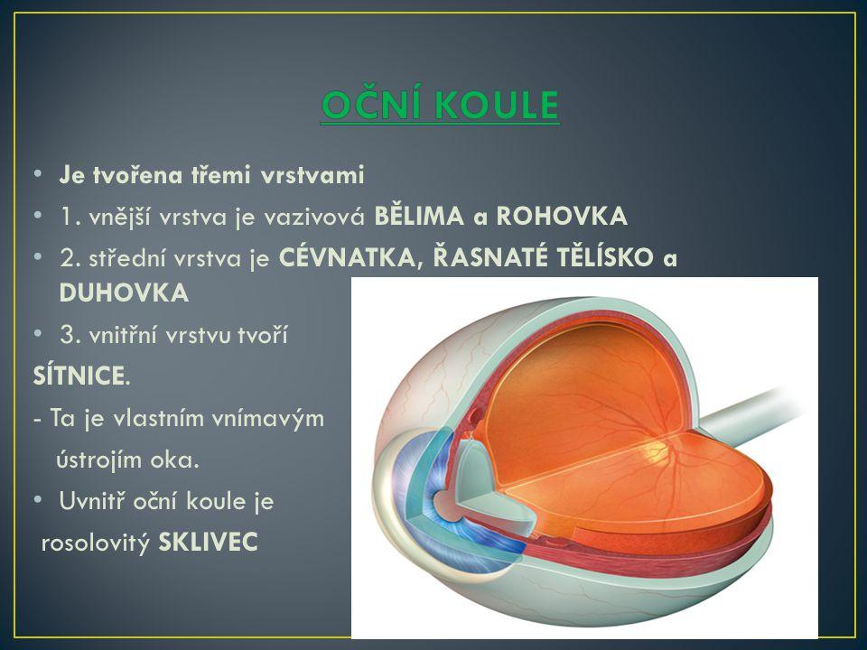 Je tvořena třemi vrstvami 1. vnější vrstva je vazivová BĚLIMA a ROHOVKA 2. střední vrstva je CÉVNATKA, ŘASNATÉ TĚLÍSKO a DUHOVKA 3. vnitřní vrstvu tvo