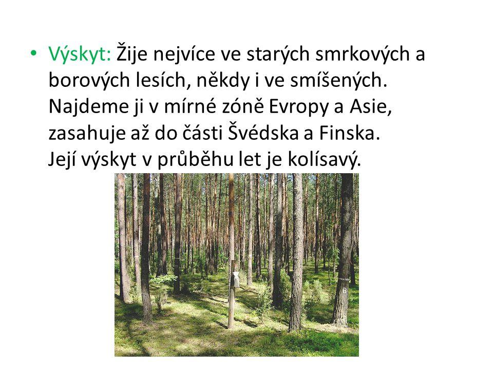 Výskyt: Žije nejvíce ve starých smrkových a borových lesích, někdy i ve smíšených. Najdeme ji v mírné zóně Evropy a Asie, zasahuje až do části Švédska