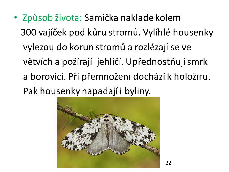 Způsob života: Samička naklade kolem 300 vajíček pod kůru stromů. Vylíhlé housenky vylezou do korun stromů a rozlézají se ve větvích a požírají jehlič