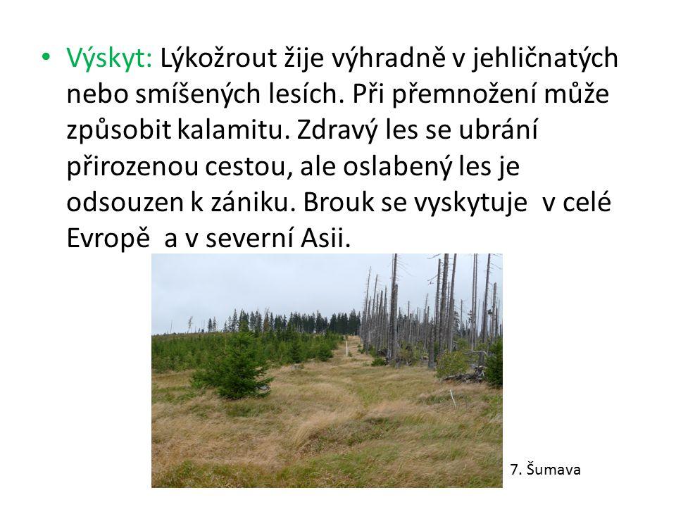 Výskyt: Lýkožrout žije výhradně v jehličnatých nebo smíšených lesích. Při přemnožení může způsobit kalamitu. Zdravý les se ubrání přirozenou cestou, a